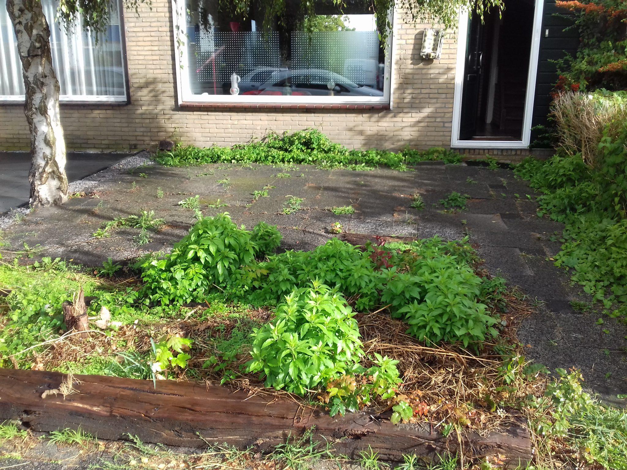 Tuin renovatie in spijkenissen